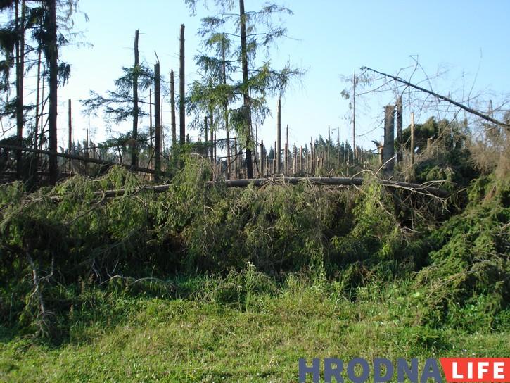 Пашкоджаныя летнімі ўраганамі ўчасткі леса
