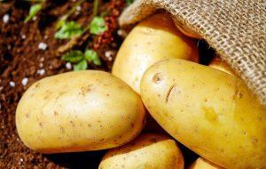 бульба картошка розыгрыш