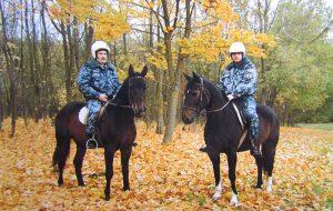 Создавали городу неповторимый имидж. Как единственный в Беларуси конный взвод 15 лет патрулировал улицы Гродно