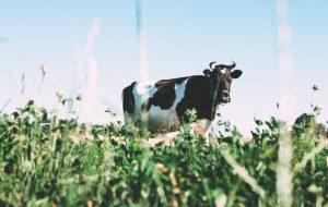 Россельхознадзор обнаружил в продукции «Молочного мира» антибиотик линкомицин