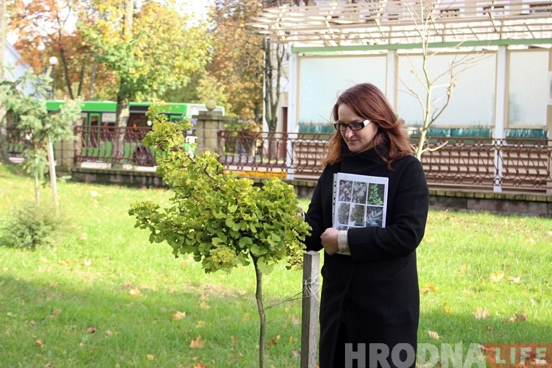 Нечаканая знаходка ў парку Жылібера: на месцы скрадзеных ядомых каштанаў растуць новыя