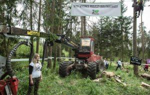Польшчу абавяжуць плаціць 100 тыс еўра штодзень за высечку ў Белавежскай пушчы