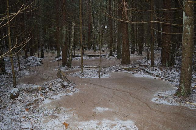 Самагоншчыкі пад Гродна забрудзілі адпрацаванай брагай 600 квадратных метраў лесу