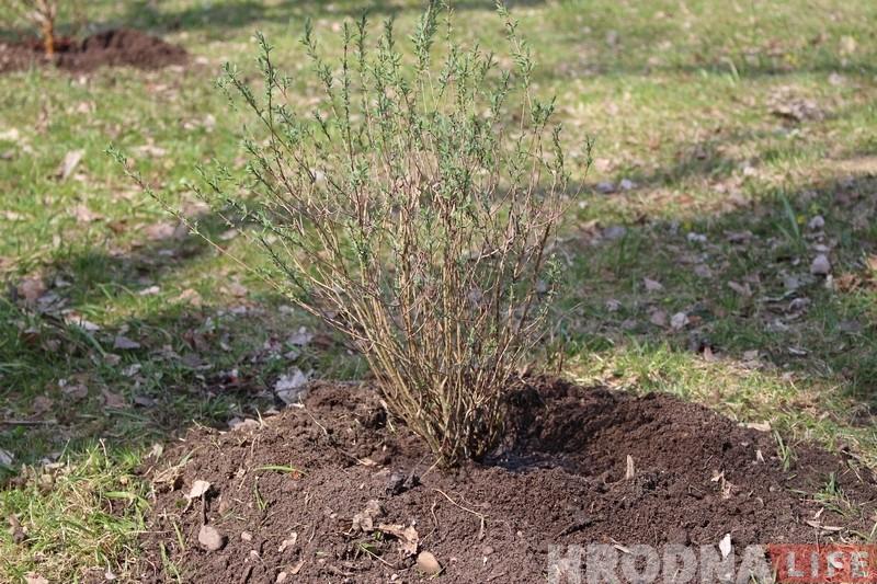 Батанічны сад у Гродне папоўніўся новымі раслінамі