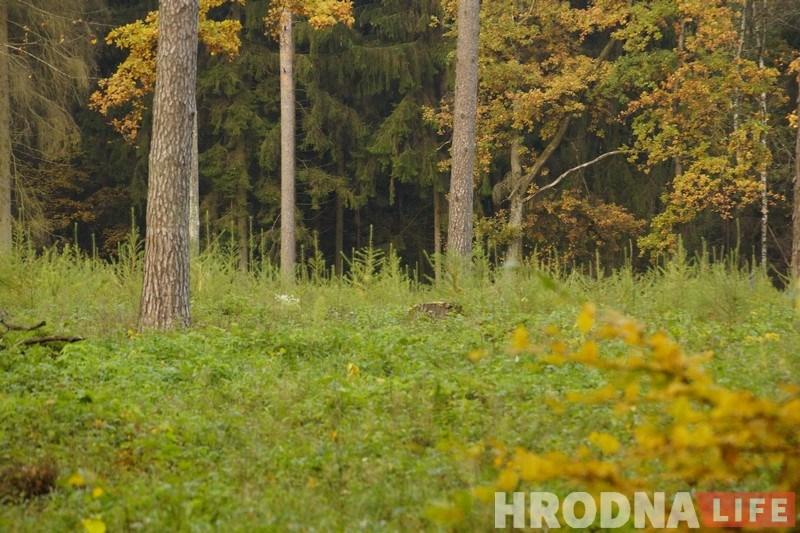 У сямі раёнах вобласці адменена забарона на наведванне лясоў