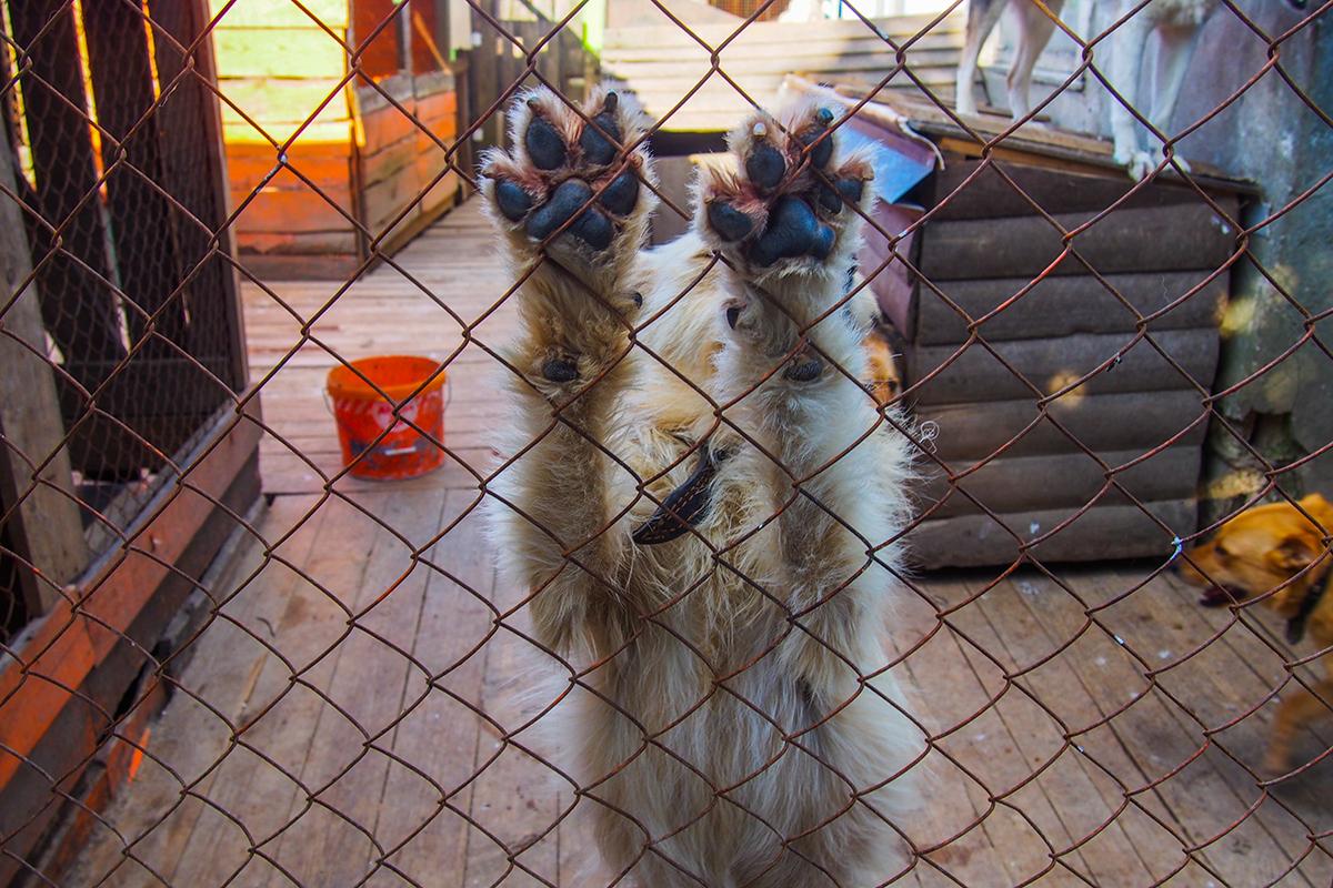 гродно приют для животных фото заказ