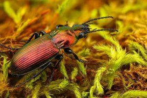 Нібы з іншай планеты: гродзенскі фатограф класна здымае насякомых і хацеў бы зрабіць выставу