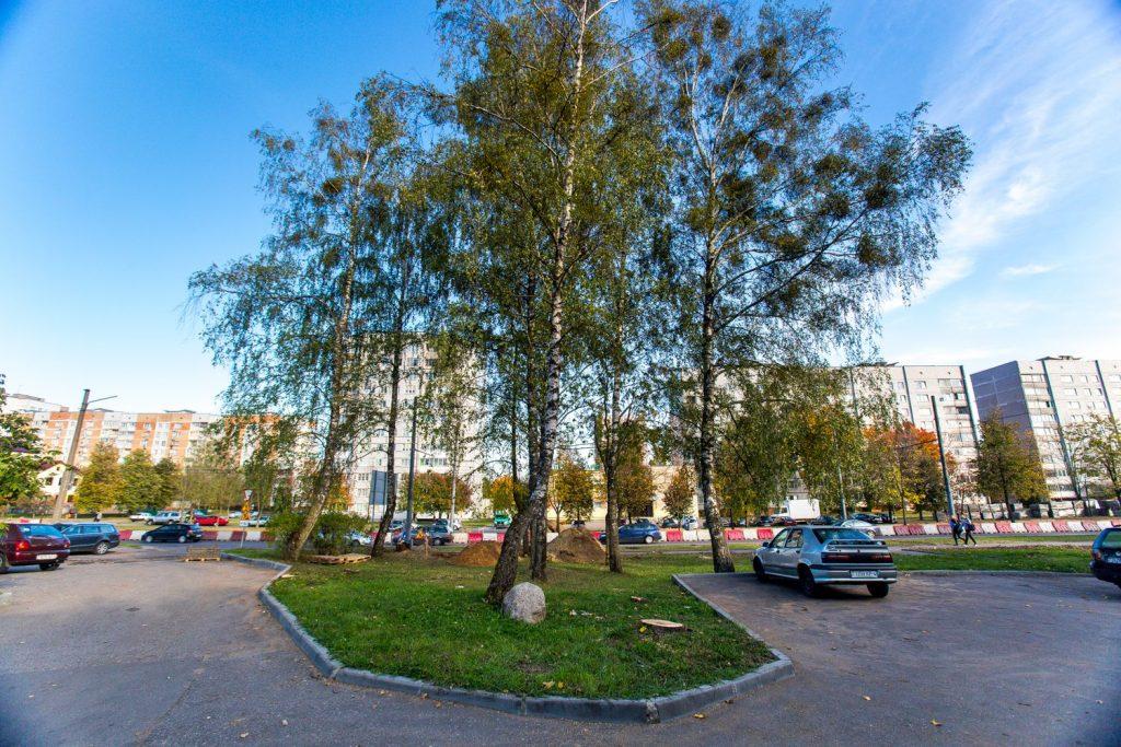 Горе-расширение в Гродно. Под шумок спилили ещё четыре незапланированных дерева