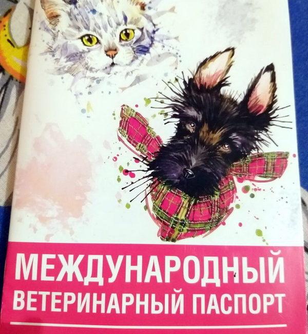Слонимчанка написала заявление в милицию на службу отлова за то, что убили её кошку