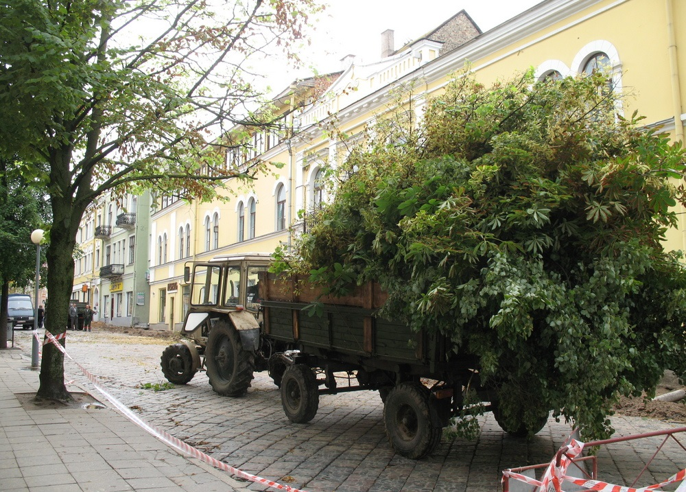 Летам 2007 года ўся зеляніна на Савецкай вуліцы была брутальна выпілавана