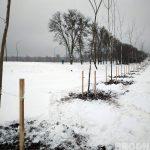 Можно ли сажать деревья зимой? В Гроднозеленстрое рассказали, почему это нормально