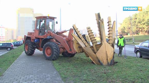 Ради остановки в Гродно не вырубили деревья, а пересадили