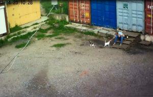 Сел на два месяца: в Гродно осудили мужчину, который задушил кота