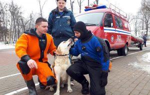Гродненские спасатели вытащили из водыеще одну собаку