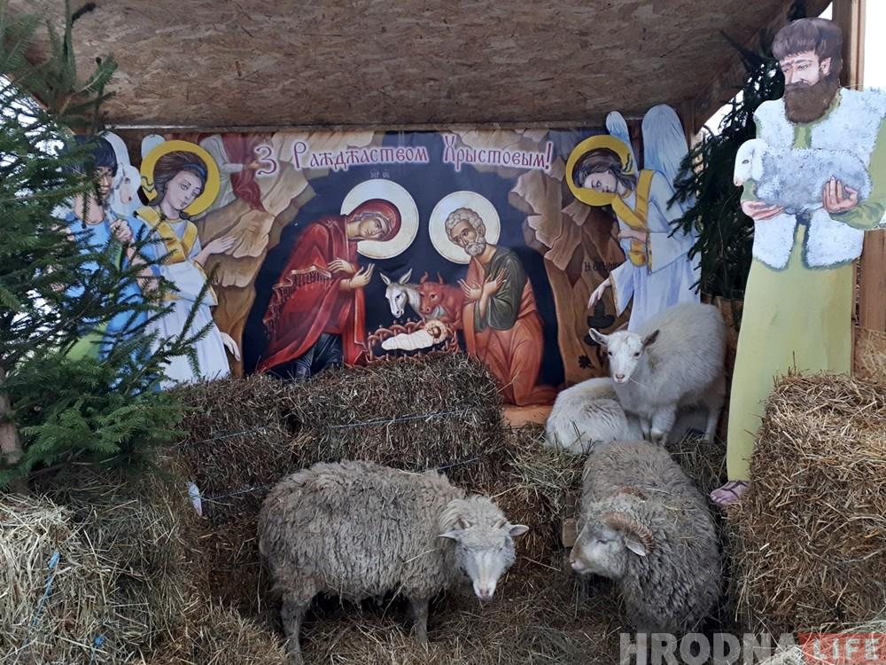 Возле Коложи украшением рождественского вертепа стали живые овечки и козлята