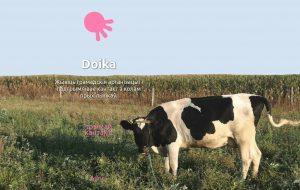 Валанцёры праграмы Doika раскажуць гродзенскім актывістам пра новыя магчымасці краўдфандынгу