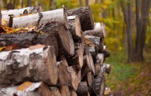 Теперь станет проще заготавливать дрова, а ремесленникам – лещину. Изменили Лесной кодекс