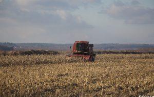 На Слонимщине кукурузу убирают в феврале