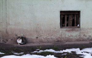 Кото-строфа и собачья жизнь. Что в Гродно с бродячими животными и как это исправить