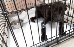 Гродненец бил собаку и оставил на морозе - завели уголовное дело.  Говорит делал это из-за жизненных трудностей