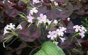 600 тысяч цветов высадят в Гродно этой весной