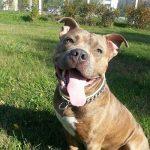 После нападения собаки на ребенка прокуратура проверила условия содержания животных