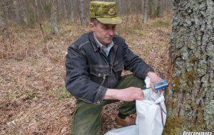 В лесничествах Гродненского района начинают собирать березовый сок