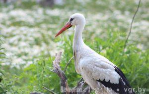 Сотни тысяч птиц прилетели из тёплых краёв в нашу область