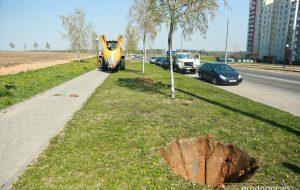 Как в Гродно используют «Большой Джон» - машину для пересадки больших деревьев