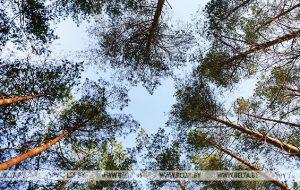 Неделя леса пройдет в Беларуси 13-20 апреля. Поучаствовать может каждый