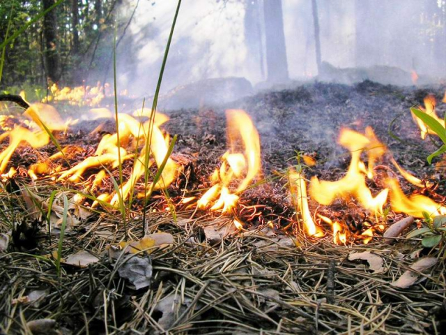 В Гродненской области ввели запрет на посещение лесов. Учитывайте на выходных