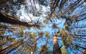 Почти во всей Гродненской области сняты запреты на посещение лесов, осталось 4 закрытых района