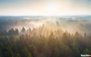 Паглядзіце, якія шыкоўныя ФОТЫ туманнага ранку над Аўгустоўскай пушчай
