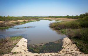 «Ни рыбки, ни жабки». Жители деревни около Щучина хотят вернуть озеро, пропавшее 15 лет назад