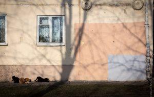 «ЖЭС-арт». Белорус снял фильм про стерильные улицы и закрашеные граффити