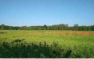 Гродненская милиция уничтожила на одном поле почти две тонны мака