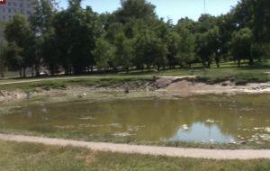 В Гродно засыхают пруды и сохнут деревья. ЖКХ: закачка воды нецелесообразна