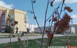 В Беларуси запретили высаживать для озеленения маленькие деревца
