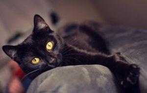 Животные ищут дом: две собаки и кот, которые могут стать вашими друзьями