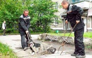Гродненские активисты пытались проконтролировать бригады по отлову животных. Дошло до прокуратуры