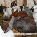 В Сморгонском районе сосед украл у местного жителя десять кроликов