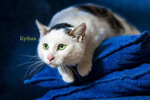 Жывёлы шукаюць дом: выбірай котку або сабаку, якія вельмі хочуць з табой пасябраваць