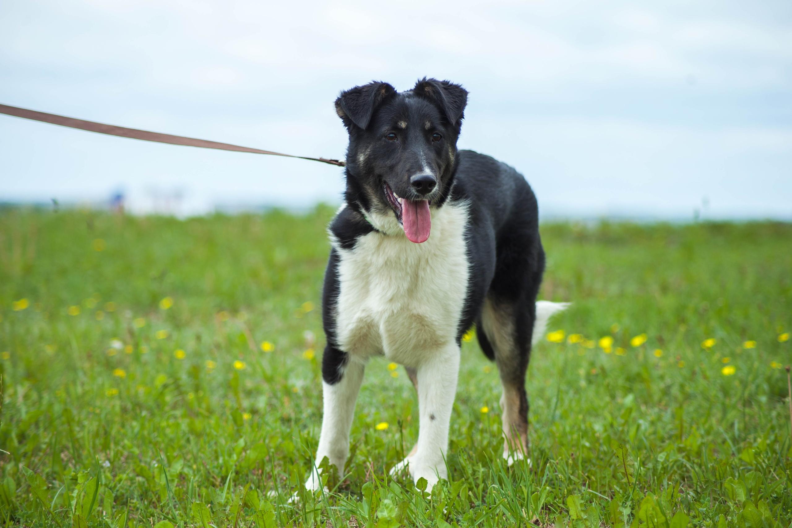 Животные ищут дом: вот какие собаки и котики ждут, когда вы их приютите