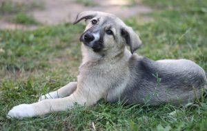 Животные ищут дом: кошки и собаки от 3 месяцев до 3 лет ждут хозяина и друга