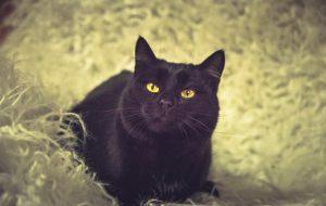 Животные ищут дом: щенки-милашки и черные кошки-музы поэтов