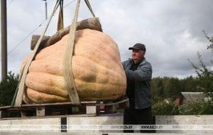 Тыкву весом 450 кг можно увидеть в Коробчицах под Гродно