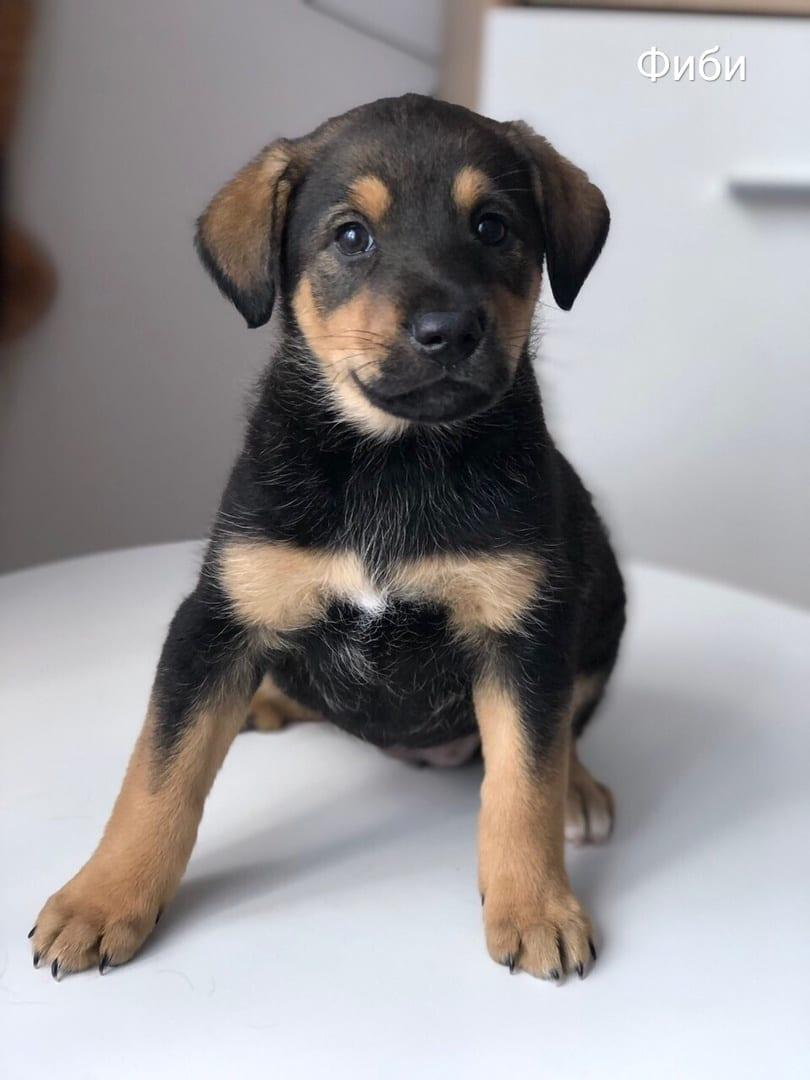 собака щенок в дар