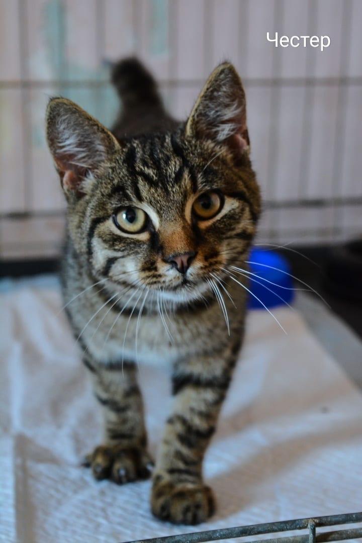 котенок кот в дар