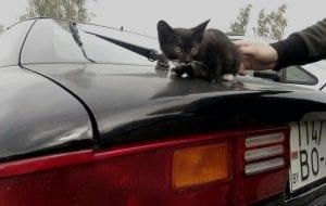 На СТО под капотом автомобиля приехал котенок. Ему ищут новых хозяев