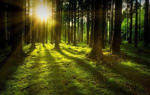Осень. В четырех районах Гродненской области введен запрет на посещение лесов